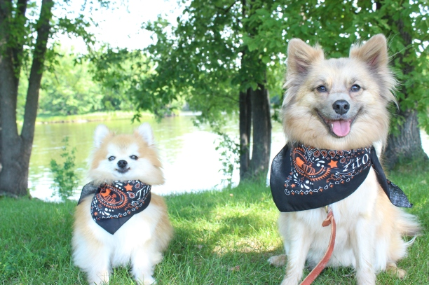 Two fur-brothers enjoying some hiking adventures along the Mississippi River in Minnesota.