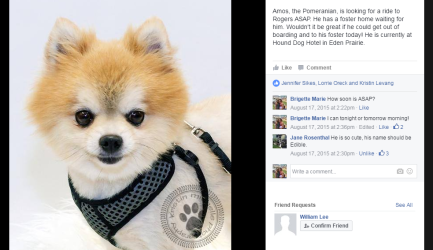 Underdog Rescue MN posted this photo to Facebook asking for a volunteer to help transport this adorable Pomeranian to his foster home.