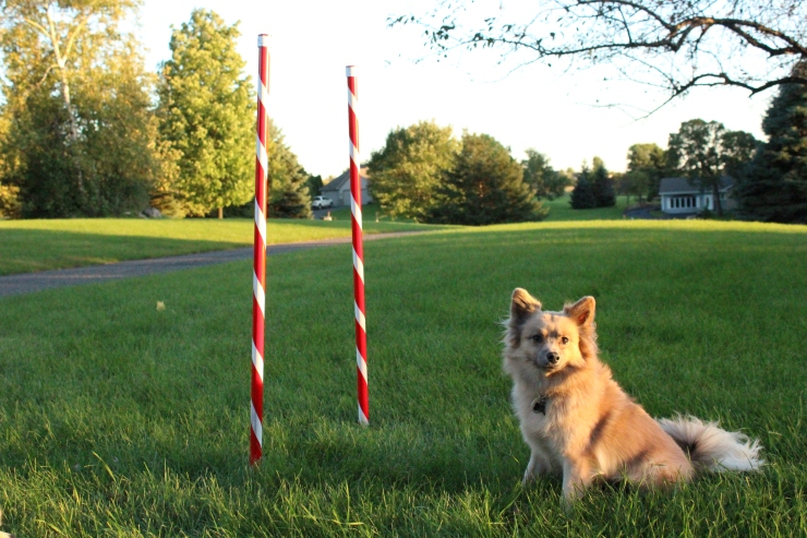 weave-poles-finished-017