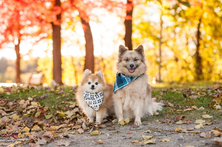 Two pups with healthy skin and coat from a holistic lifestyle.